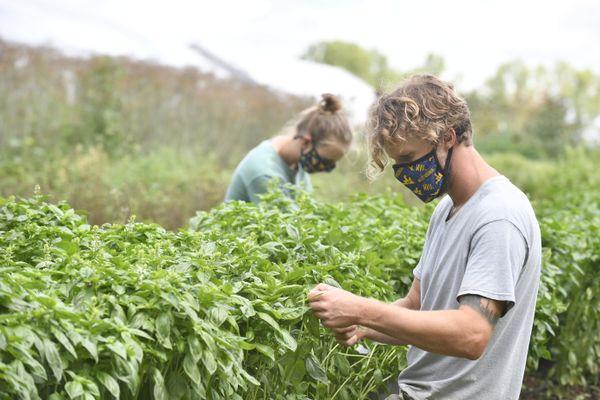 people masked in garden